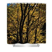 Golden Colors Of Autumn In New England  Shower Curtain