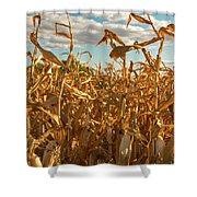 Golden Crop Shower Curtain