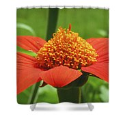 Golden Crown On Red Shower Curtain