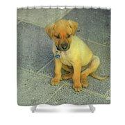 Golden Cunucu Puppy In Aruba Shower Curtain