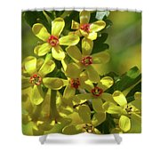 Golden Currant Blossoms Shower Curtain