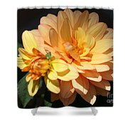 Golden Dahlia With Bud Shower Curtain