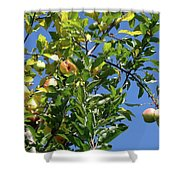 Golden Delicious Danglers Shower Curtain