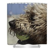 Golden Doodle And His Ball Shower Curtain