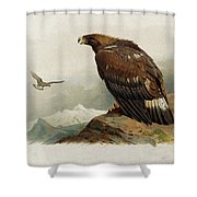 Golden Eagle By Thorburn Shower Curtain