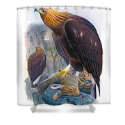 Golden Eagle Antique Print John Gould Birds Of Great Britain Shower Curtain