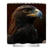 Golden Eagle - Predator Shower Curtain by Sue Harper