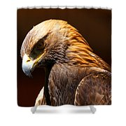 Golden Eagle - The Thinker Shower Curtain by Sue Harper