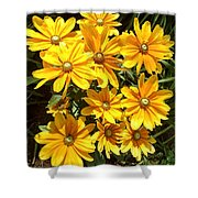 Golden Eyed Susans Shower Curtain