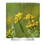 Golden Flattop Shower Curtain