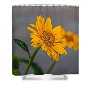 Golden Flower II Shower Curtain