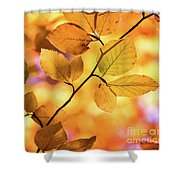 Golden Foliage Shower Curtain