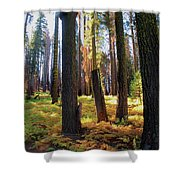 Golden Forest Bed Shower Curtain