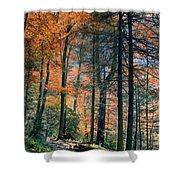 Golden Forest Path Shower Curtain