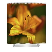 Golden Gazer Shower Curtain