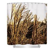 Golden Grass Flowers Shower Curtain