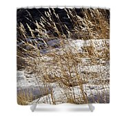 Golden Grasses In Sun And Snow Shower Curtain