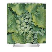 Golden Green Grapes Shower Curtain