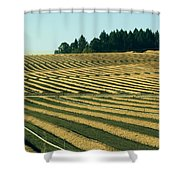 Golden Green Shower Curtain