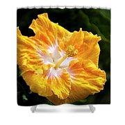 Golden Hibiscus - Hawaii Shower Curtain