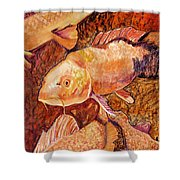 Golden Koi Shower Curtain by Pat Saunders-White