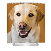 Golden Lab Shower Curtain
