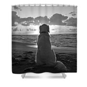 Golden Labrador Watching Sunset Shower Curtain