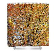 Golden Leaves - Oil Paint Shower Curtain