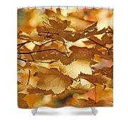 Golden Light Autumn Maple Leaves Shower Curtain