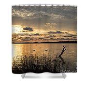 Golden Light Shower Curtain