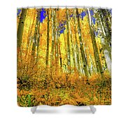 Golden Light Of The Aspens - Colorful Colorado - Aspen Trees Shower Curtain
