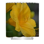 Golden Lily 18-2 Shower Curtain