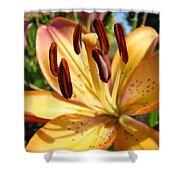 Golden Lily Flower Orange Brown Lilies Art Prints Baslee Troutman Shower Curtain