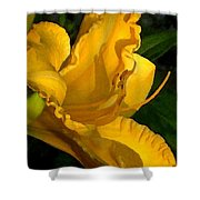 Golden Lily Watercolor Shower Curtain
