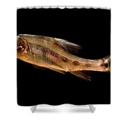 Golden Line Barbel Shower Curtain