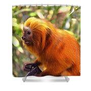 Golden Lion Tamarin Shower Curtain