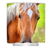 Golden Locks Shower Curtain by David Millenheft