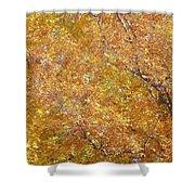 Golden Shower Curtain