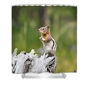 Golden Mantled Ground Squirrel Shower Curtain