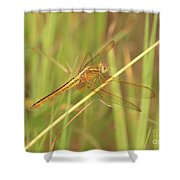 Golden Marsh Dragonfly Shower Curtain
