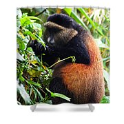 Golden Monkey II Shower Curtain