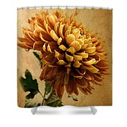 Golden Mum Shower Curtain