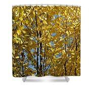 Golden October Shower Curtain