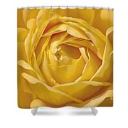 Golden One Shower Curtain