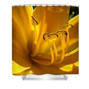 Golden Orange Lily Art Print Lilies Flowers Baslee Troutman Shower Curtain