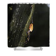 Golden Orb Spider Shower Curtain
