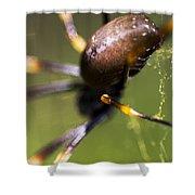 Golden Orb Spider Shower Curtain
