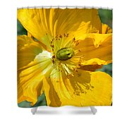 Golden Poppy Expose Shower Curtain