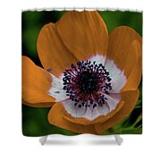 Golden Poppy Shower Curtain