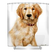 Golden Pup Shower Curtain